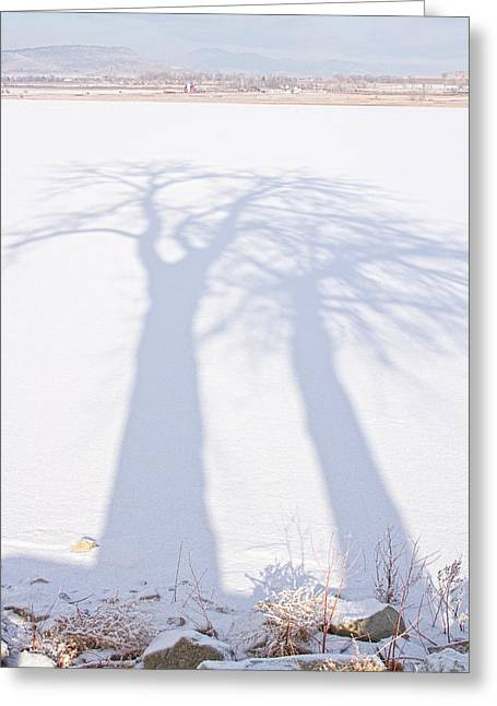 James Powders Greeting Cards - Big Tree Shadow Portrait Greeting Card by James BO  Insogna