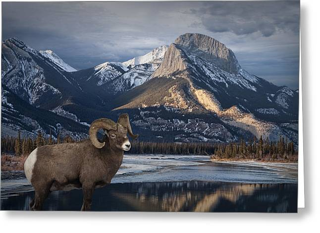 Bighorn In The Mountains Of Jasper National Park In Canada Greeting Card by Randall Nyhof
