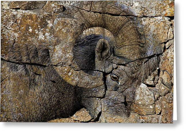 Sheep On Rocks Greeting Cards - Bighorn Rock Art Greeting Card by Steve McKinzie