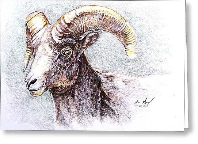 Goat Drawings Greeting Cards - Bighorn Sheep Greeting Card by Aaron Spong