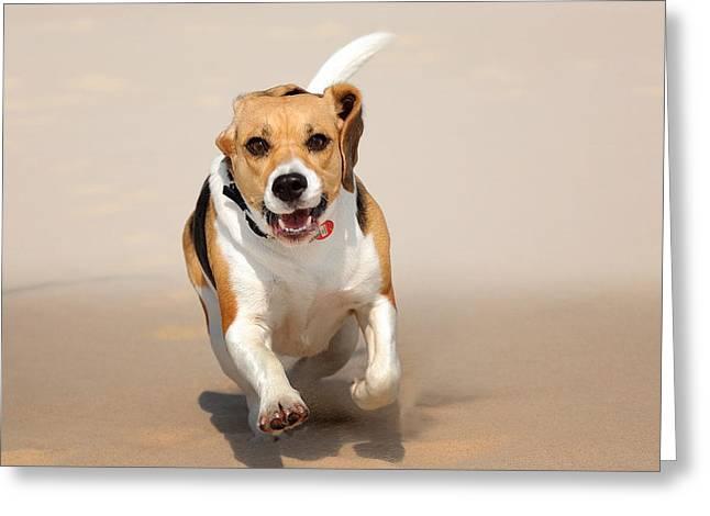 Puppies Photographs Greeting Cards - Bigiel Greeting Card by Jan Sieminski