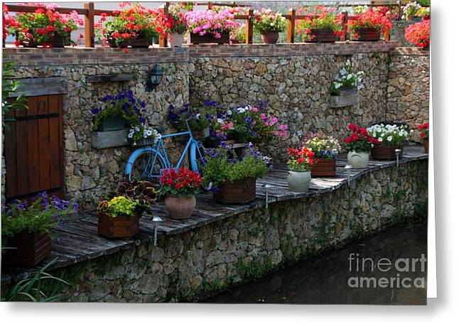 Recently Sold -  - Michelle Greeting Cards - Bike by the river Greeting Card by Michelle Orai