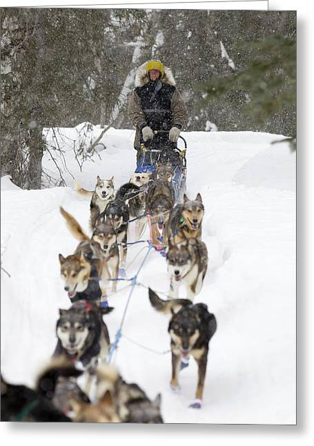 Husky Greeting Cards - Bill Pinkham On The Trail In A Heavy Greeting Card by Jeff Schultz