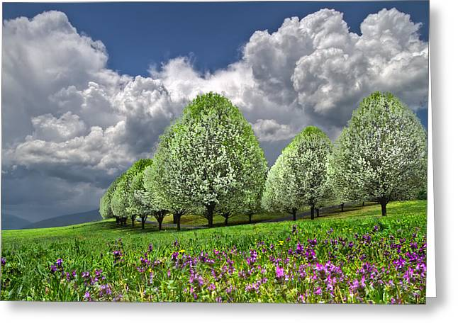 Franklin Farm Greeting Cards - Billows Greeting Card by Debra and Dave Vanderlaan