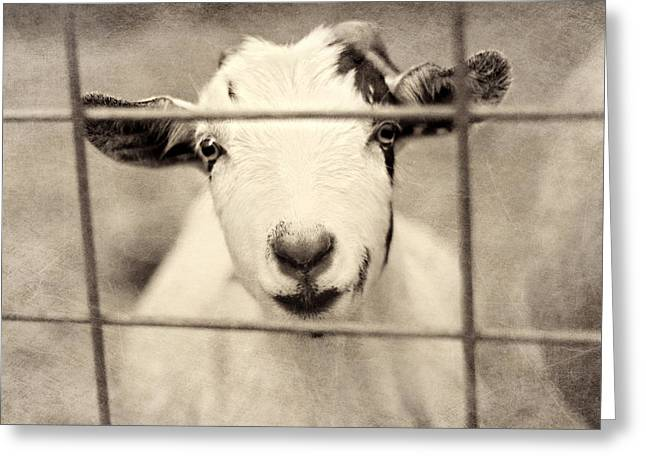Goat Photographs Greeting Cards - Billy G Greeting Card by Amy Tyler