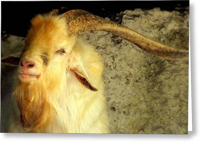 Billy Goat Gruff Greeting Card by Karen Wiles