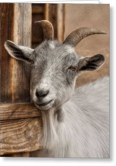 Goat Digital Greeting Cards - Billy Goat Greeting Card by Lori Deiter