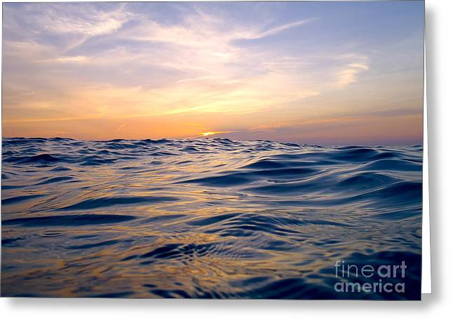 Reef Fish Greeting Cards - Bimini Sunset Greeting Card by Carey Chen