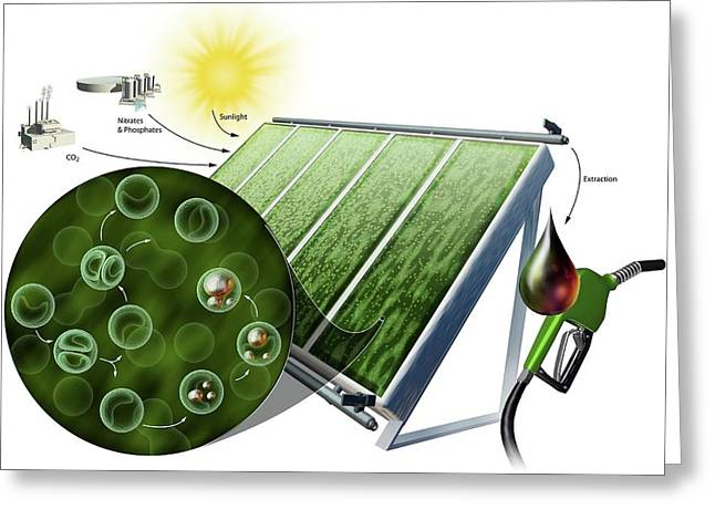 Biofuel From Algae Greeting Card by Nicolle R. Fuller