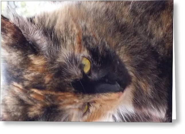 Bipolar Greeting Cards - Bipolar Cat Greeting Card by William Ramcke