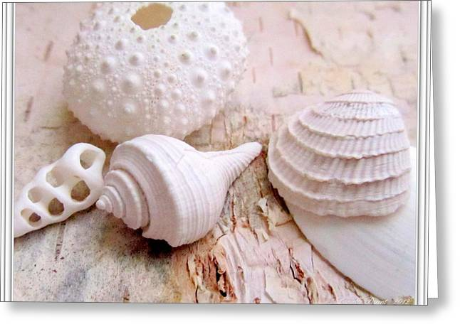 Beach Theme Posters Greeting Cards - Birch and Shells Greeting Card by Danielle  Parent