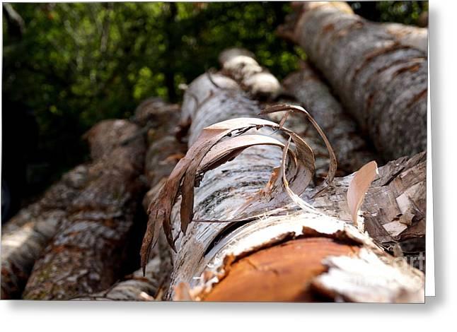 New Hampshire Logging Greeting Cards - Birch Bark Curl Greeting Card by Kerri Mortenson