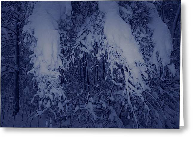 Snowy Night Night Greeting Cards - Birch branches laden with snow Greeting Card by Intensivelight