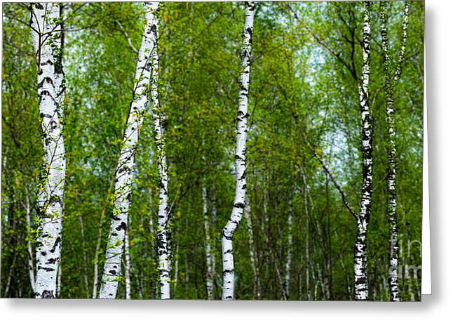 Birch Forest Greeting Card by Hannes Cmarits