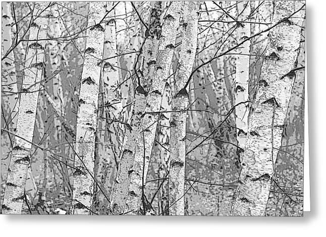 Birch Forest Greeting Card by Rob Huntley