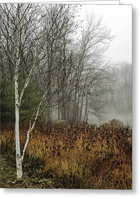 Birch In Winter Greeting Card by Fran Gallogly
