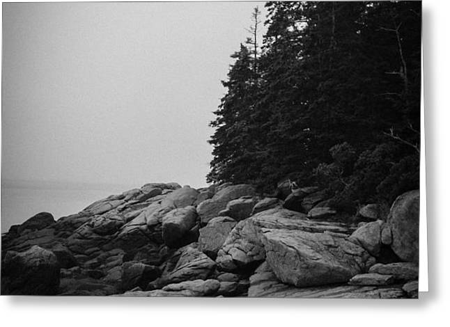 Birch Point Black and White Greeting Card by Belinda Dodd