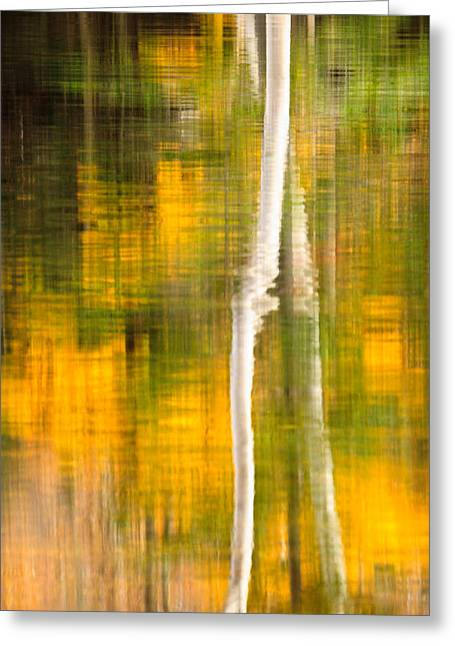 Birch Reflections Greeting Card by Jeff Sinon