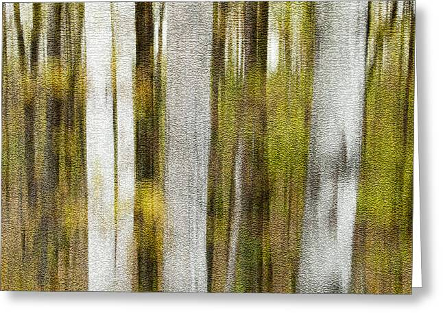 Woods Greeting Cards - Birch Square Greeting Card by Rob Huntley