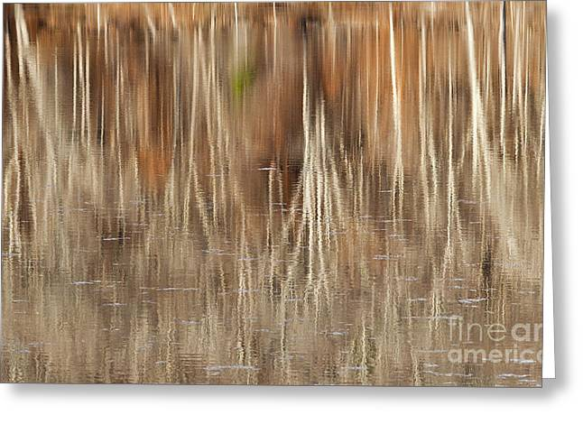 Birch Tree Reflections Greeting Card by Alan L Graham