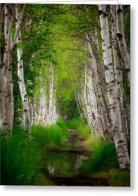 Maine Spring Greeting Cards - Birch tree row Greeting Card by Emmanuel Panagiotakis