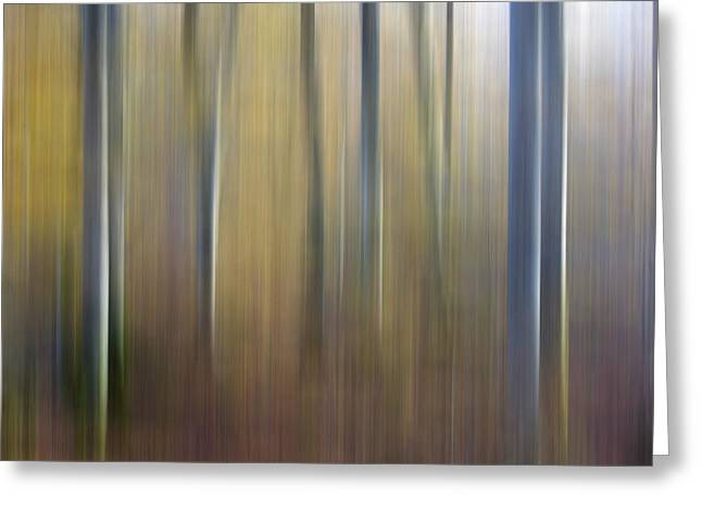 Birch Tree Greeting Cards - Birch trees. Abstract. Blurred Greeting Card by Bernard Jaubert