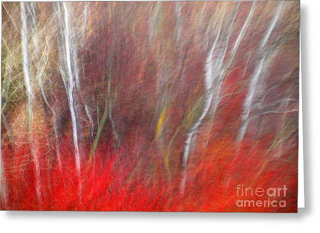 Tara Turner Greeting Cards - Birch Trees Abstract Greeting Card by Tara Turner