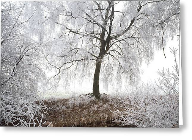 Birch Tree Greeting Cards - Birch Trees Covered With Snow Greeting Card by Panoramic Images