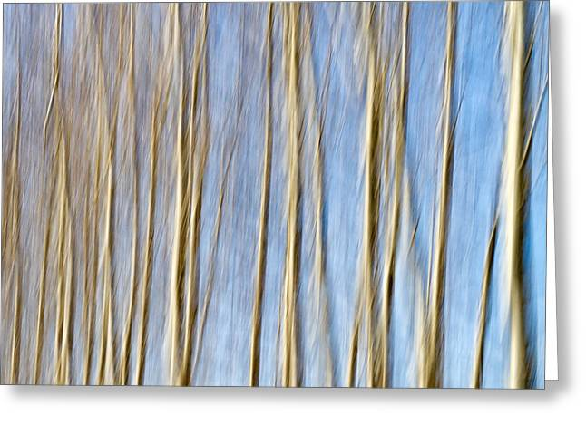 birch trees Greeting Card by Stylianos Kleanthous