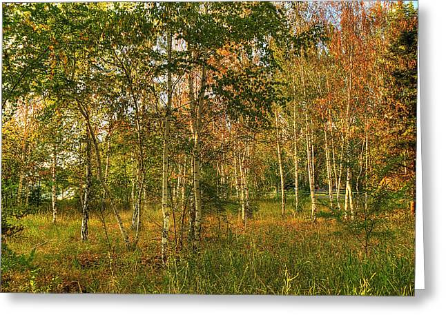 Birch Tree Digital Greeting Cards - Birch Trees2 Greeting Card by Svetlana Sewell