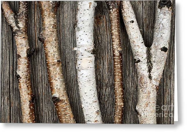 Branches Photographs Greeting Cards - Birch trunks Greeting Card by Elena Elisseeva