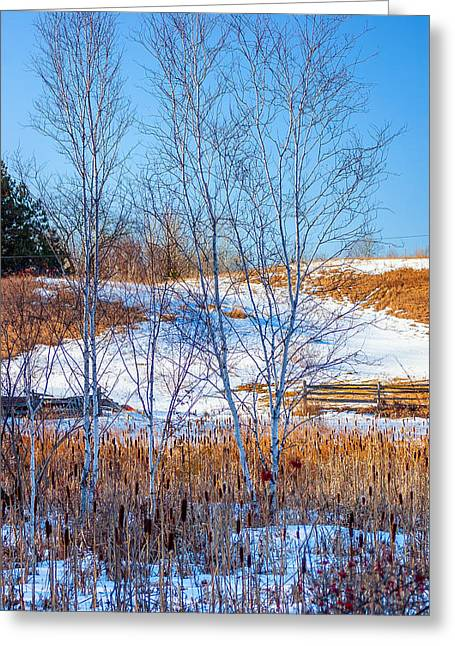 Split Rail Fence Greeting Cards - Birches and Cattails Greeting Card by Steve Harrington