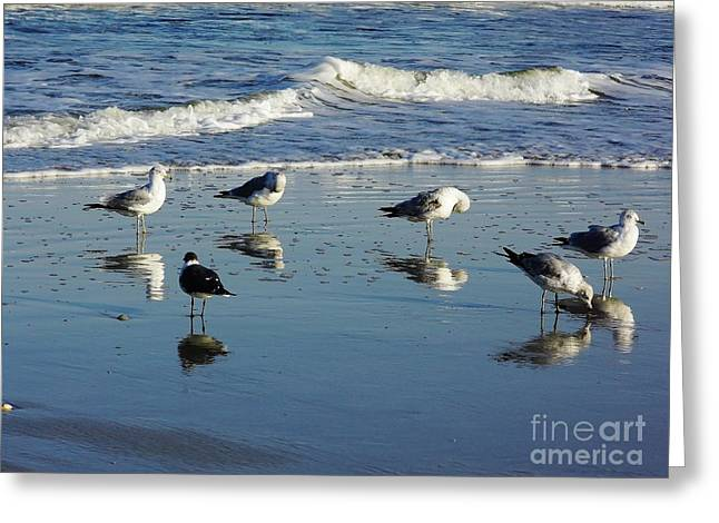 Best Ocean Photography Greeting Cards - Bird - Reflections Greeting Card by D Hackett
