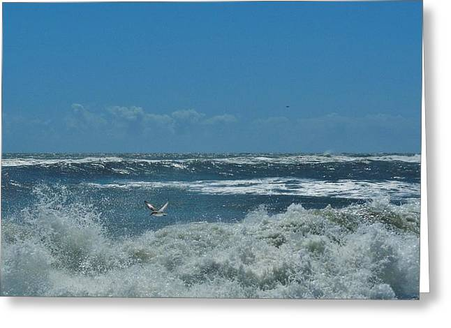 Sailboat Ocean Greeting Cards - Bird and Jet flying 8/26 Greeting Card by Mark Lemmon