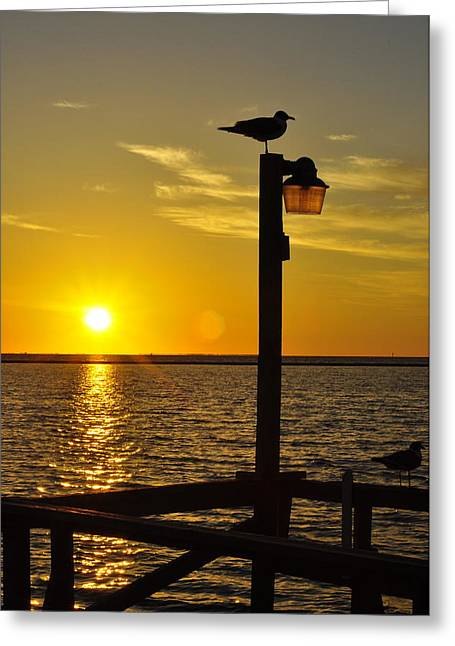 Angela Castillo Greeting Cards - Bird and Sunset Greeting Card by Angela Castillo