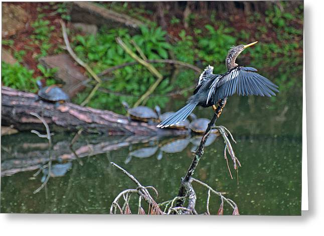 Reflection In Water Greeting Cards - Bird and Turtles on Jekyll Island Greeting Card by Bruce Gourley