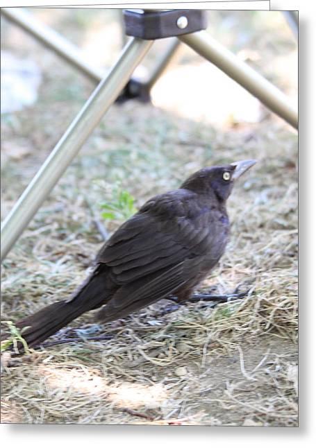 Birding Photographs Greeting Cards - Bird - Animal - 01132 Greeting Card by DC Photographer
