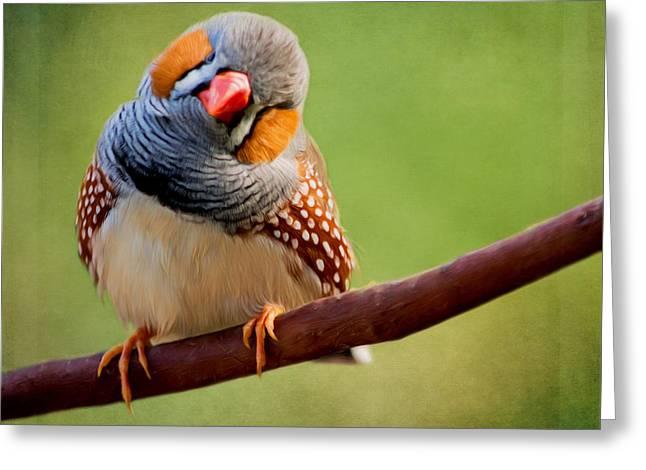 Jordan Digital Greeting Cards - Bird Art - Change Your Opinions Greeting Card by Jordan Blackstone