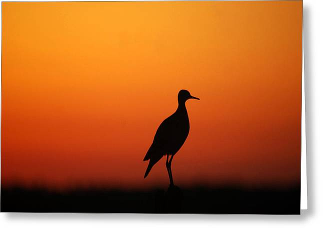 Outlook Greeting Cards - Bird at Sunset Greeting Card by Pamela Peters