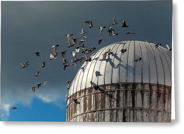 Bird - BIRDS Greeting Card by Mike Savad