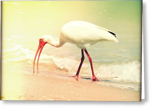 Retro Bird Greeting Cards - Bird Breakfast Lights Greeting Card by Chris Andruskiewicz