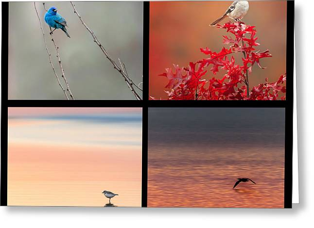 Mockingbird Greeting Cards - Bird Collage Square Greeting Card by Bill  Wakeley