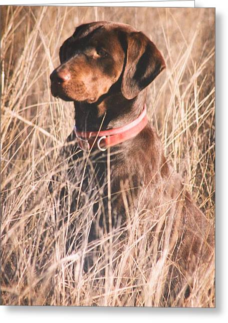 Chocolate Lab Greeting Cards - Bird Dog Greeting Card by Brad Fuller