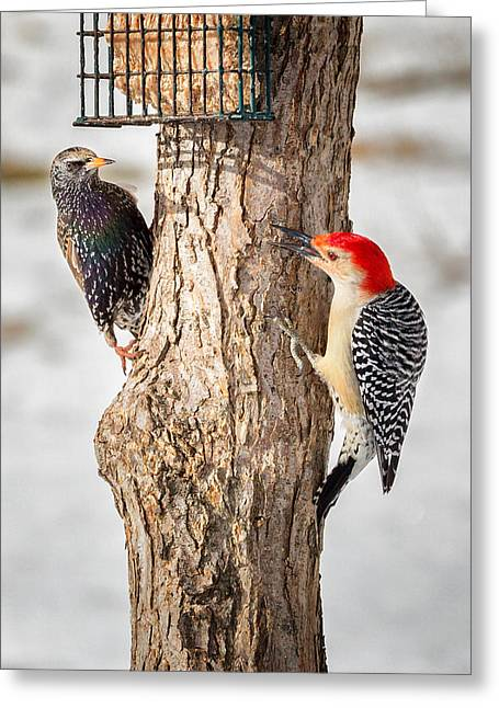 Woodpecker Greeting Cards - Bird Feeder Stand Off Greeting Card by Bill  Wakeley