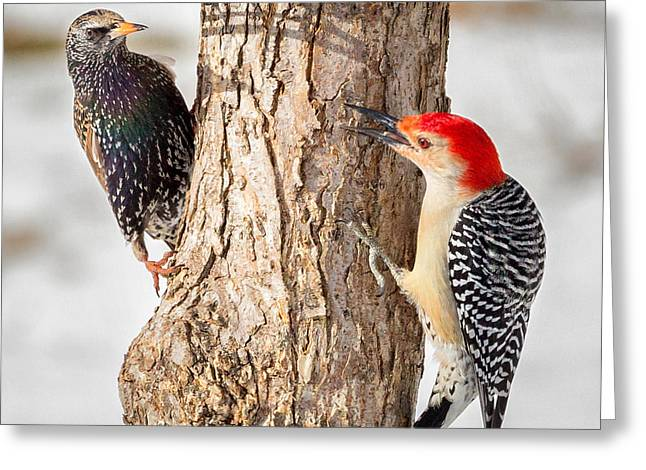 Woodpecker Greeting Cards - Bird Feeder Stand Off Square Greeting Card by Bill  Wakeley