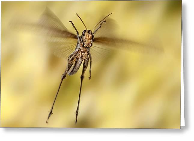 Robert Jensen Greeting Cards - Bird Grasshopper in Flight Greeting Card by Robert Jensen