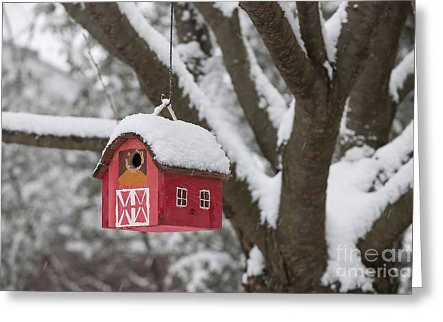 Bird-feeder Greeting Cards - Bird house on tree in winter Greeting Card by Elena Elisseeva