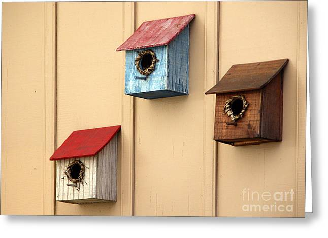 Bird Houses Greeting Card by Tim Holt