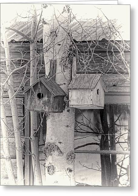 Log Cabins Greeting Cards - Bird Houses Vintage Style Greeting Card by Jenny Hudson