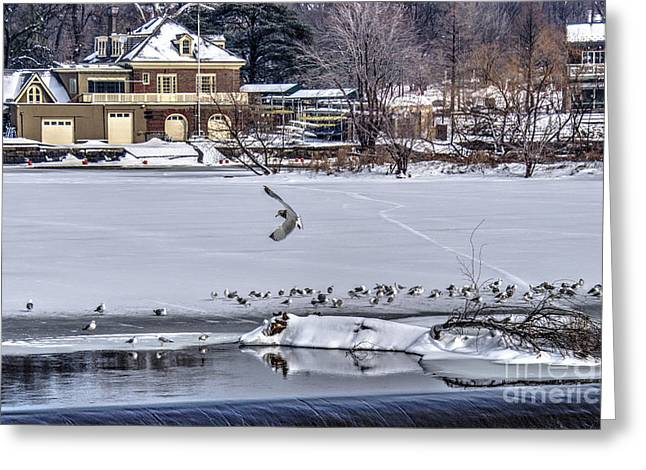 Williams Dam Greeting Cards - Bird in Flight - Boathouse Row Greeting Card by Mark Ayzenberg